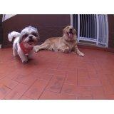 Dog Sitter quanto custa em média na Vila Bastos