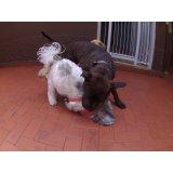 Dog Sitter quanto custa na Vila Mira
