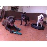 Dog Sitter valor em Campos Elísios