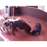 Dog Sitter valores na Vila Linda