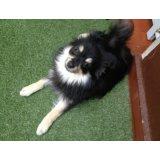 Dog Walker preços na Vila Barra Funda