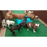 Dogsitter preços no Parque Vila Maria