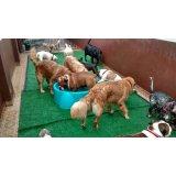 Dogsitter quanto custa em média na Fazenda dos Tecos