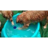 Dogsitter quanto custa na Vila Rio Branco