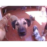 Empresa Day Care Canino no Jardim Ocara