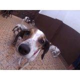Empresa Day Care Canino no Parque Continental