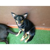 Empresa de Adestradores de Cães onde encontro na Vila Junqueira