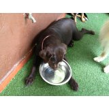 Empresa de Adestradores de Cães onde tem no Jardim Amália