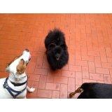 Empresa de Adestramento de Cachorros