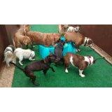 Empresa de Babás para Cães
