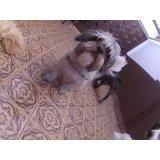 Empresa de Day Care Canino na Vila Charlote