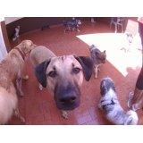 Empresa de Dog Sitter