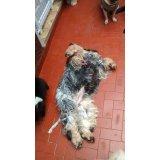 Empresa de Dogsitter na Vila Clara