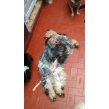Empresa de Dogsitter na Vila Liviero