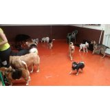 Empresa Dogsitter no Jardim Hípico