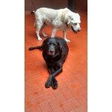 Empresas Dogsitter na Vila Rica