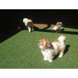Hospedagem Canina com valor baixo na Vila Floresta