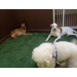 Hospedagem Canina com valor bom na Chácara Flora