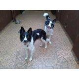 Hospedagem Canina preços no Jardim Lusitânia