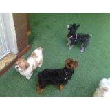 Hospedagem Canina quanto custa no Jardim Cotching