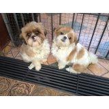 Hospedagem Canina valor no Jardim Glória