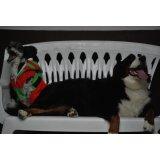 Hotéis para Cães no Parque Maria Luisa