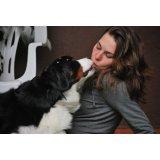 Hotéis para Cães valores no Taboão