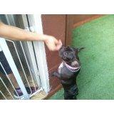 Hotel Dog onde tem no Jardim Stella