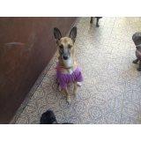Hotel para Cachorro na Vila Guaraciaba