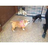 Hotel para Cachorro quanto custa em média na Vila Buarque