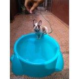 Hotel para Cães com valor bom no Jardim Tropical