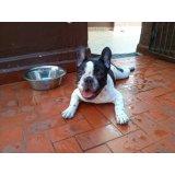 Hotel para Cães preço na Várzea da Barra Funda