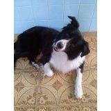 Hotel para Cães valor da diária no Indianópolis