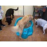 Hotelzinho Cães quanto custa em média na Vila do Cruzeiro