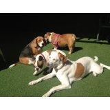 Hotelzinho Cães valor na Vila Santa Clara