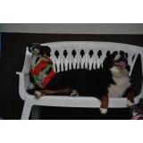 Hotelzinho para Cachorro onde achar no Conjunto Butantã