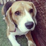 Hotelzinho para cachorros no Brooklin Paulista