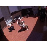 Onde contratar Day Care Canino no Jardim Ademar