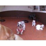 Onde contratar Serviço de Babá de Cachorros no Jardim Santa Emília