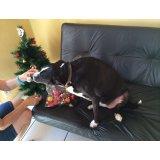 Onde encontro Empresa de Adestradores de Cachorros na Vila Fernanda