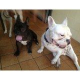 Onde encontro Hotel para Cachorro no Parque Andreense