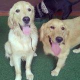 Onde posso contratar Dog Walker em Nova Gerty