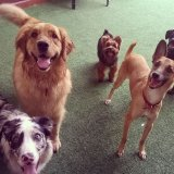 Onde tem Adestrador de Cães na Vila Canero