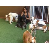 Onde tem Hotéis para Cães no Jardim Amália