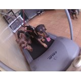 Onde tem Serviço de Daycare Canino na Vila Assunção