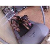 Onde tem Serviço de Daycare Canino no Parque Novo Oratório
