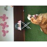 Onde tem Serviço de Dog Walker no Jardim Alzira Franco