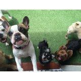 Passeador de Cachorro quero contratar na Vila Assunção