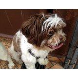 Passeador de Cães com valor baixo no Parque Novo Oratório