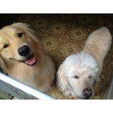 Passeador de Cães onde tem na Fazenda dos Tecos